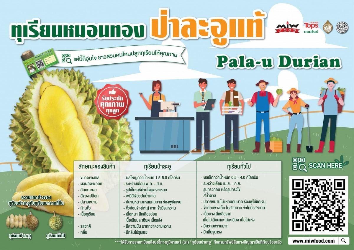 Poster Pala u Durian 01 2048x1448 1 - ทุเรียนป่าละอู ทุเรียนหมอนทองป่าละอู ปี 2564